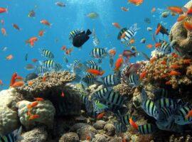 fish-288988_1280